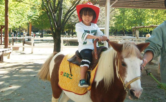 東武動物公園 ポニー
