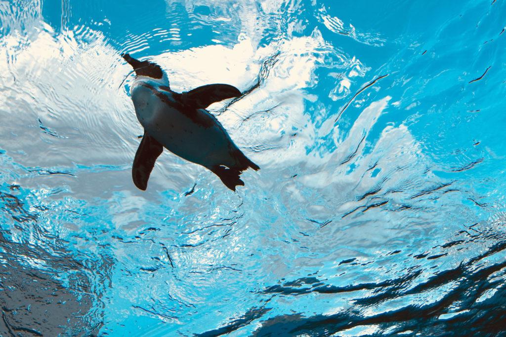 サンシャイン水族館 空飛ぶペンギン2