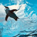 【2018年最新】サンシャイン水族館割引クーポン2,200円→1,740円!最大20%割引でチケット購入する方法